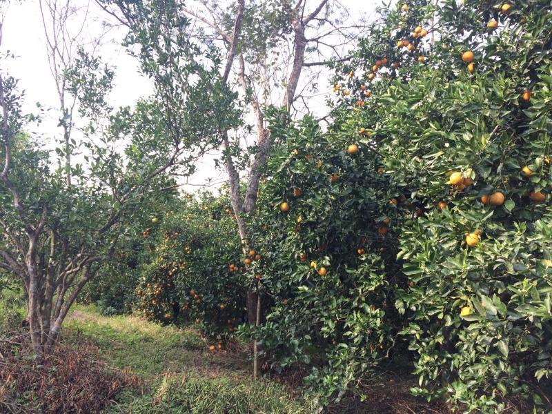 Tupandi: Agrofloresta do Inacinho é exemplo de produção em